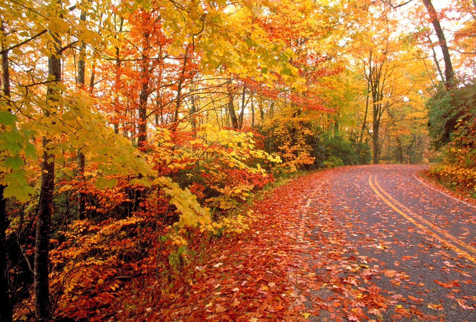 Hudson Valley Fall Foliage Autumn Leaves.jpg