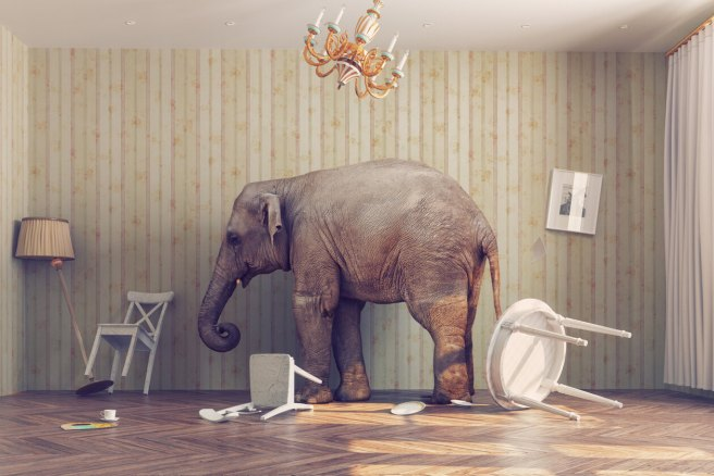 elephant-abley