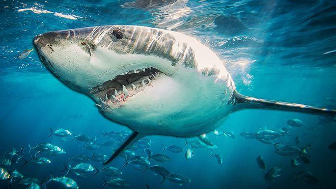 _105702604_shark976.jpg