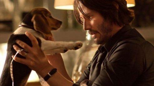 john-wick-dog-e1533830984142-625x352.jpg
