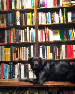 dog & books.jpg